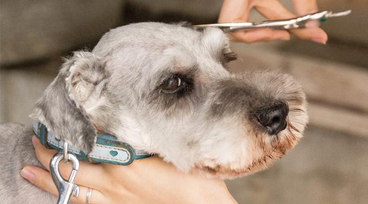 モトマチシェアサロン for dogs